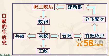 自制电老鼠电路图
